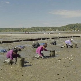 Farming shellfish on the tidal flats of Puget Sound