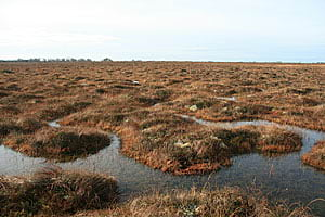 A pool system is typical of a healthy, raised bog.