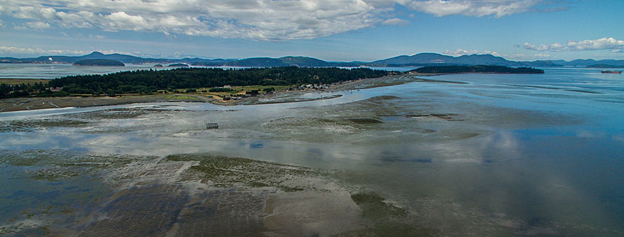 Taylor Shellfish Farms uses GIS to manage aquaculture operations in Samish Bay, Washington, and other locations. Photo courtesy of Taylor Shellfish Farms.