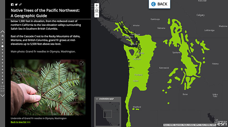 Coe created an informative guide about trees using an Esri story map.