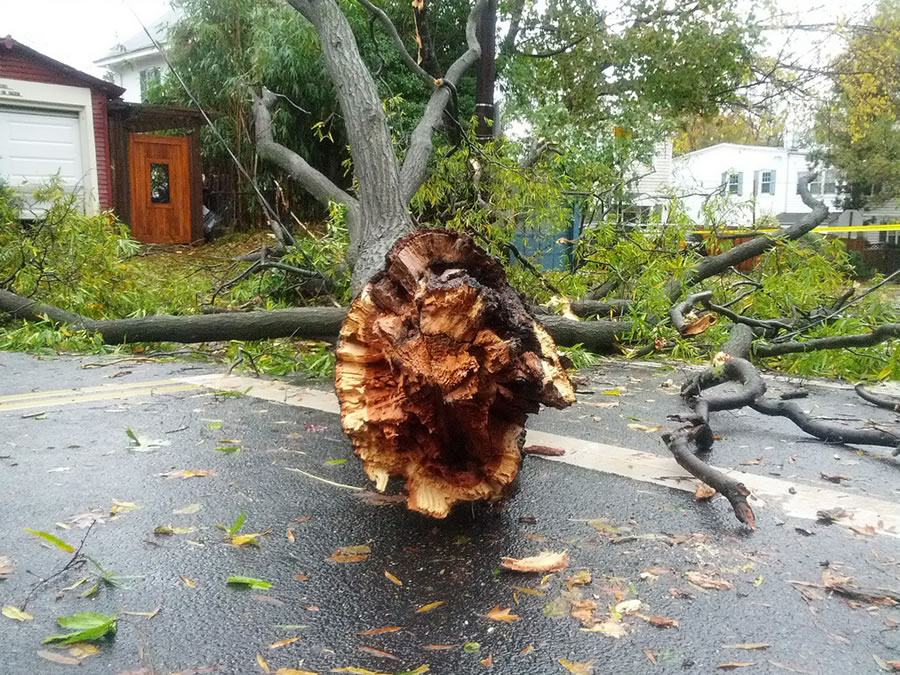 A tree toppled during a derecho storm in Washington, DC, blocking a busy roadway.