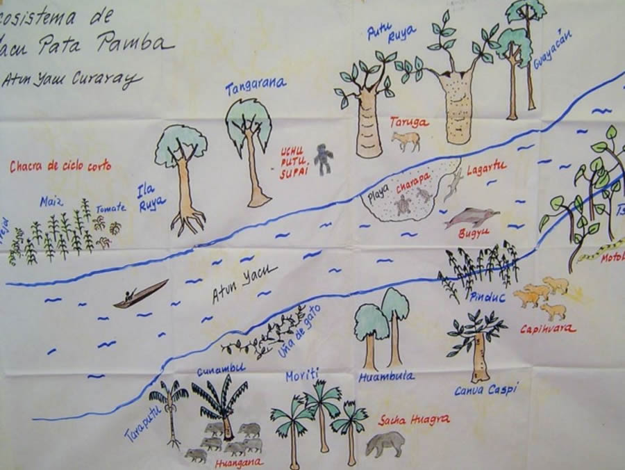 A drawing of the Kichwa Amazonian ecosystem along the river Yacu Pata Pamba.