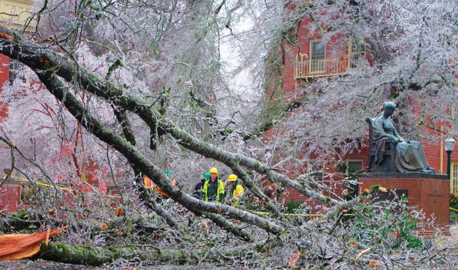 On December 14, 2016, a severe ice storm hit Eugene, Oregon, downing trees all over the city.