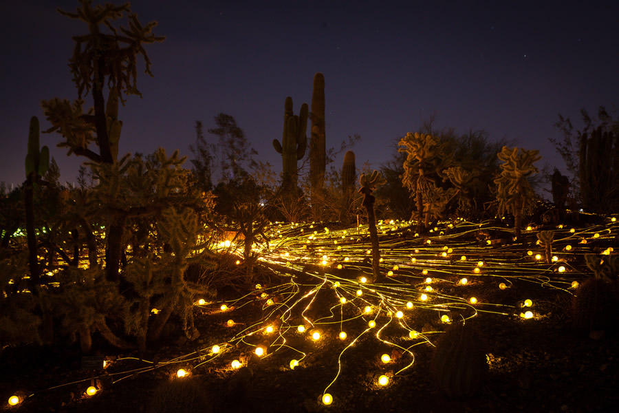 The Field of Light exhibit glows in the dark at Desert Botanical Garden. (Photo by Adam Rodriguez.)