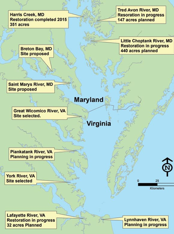 Chesapeake Bay oyster rehabilitation projects