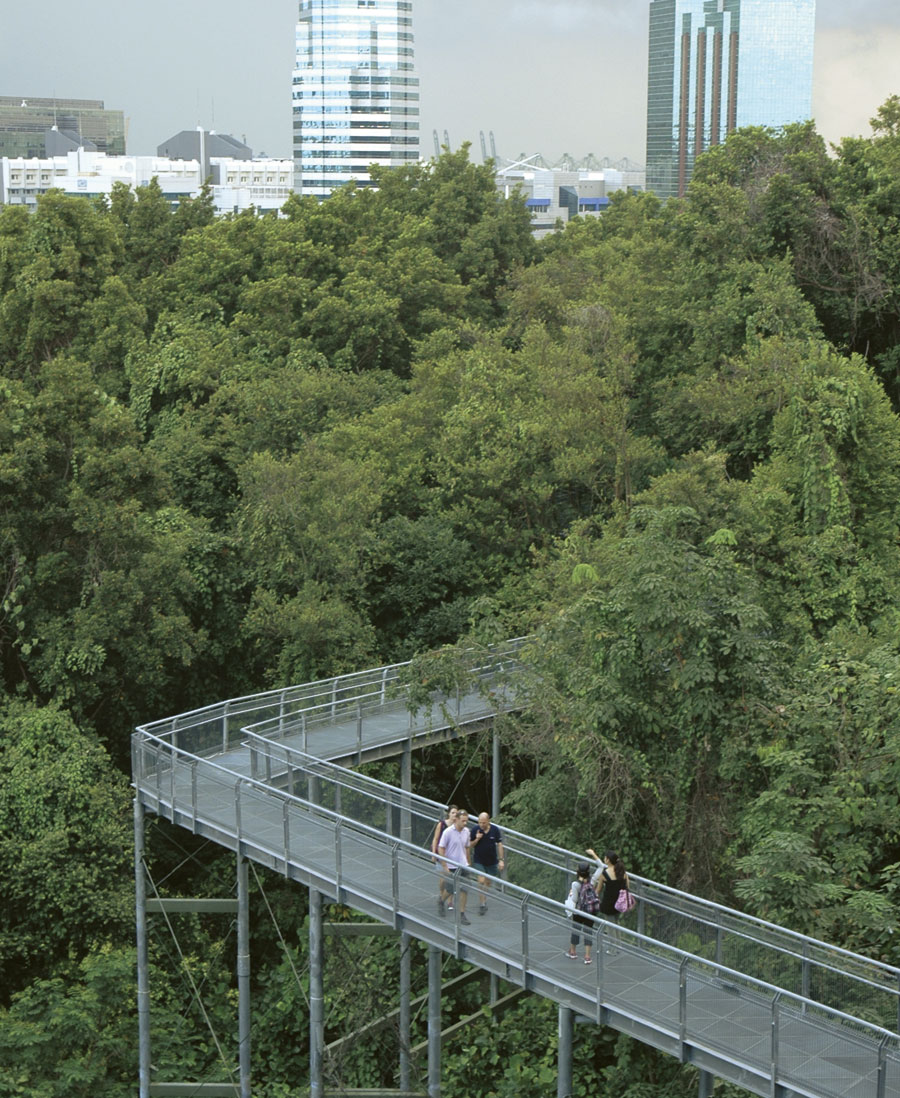 Park connectors, like this one in Singapore, allow urban dwellers to walk, bike, and jog from place to place without leaving vegetated areas.