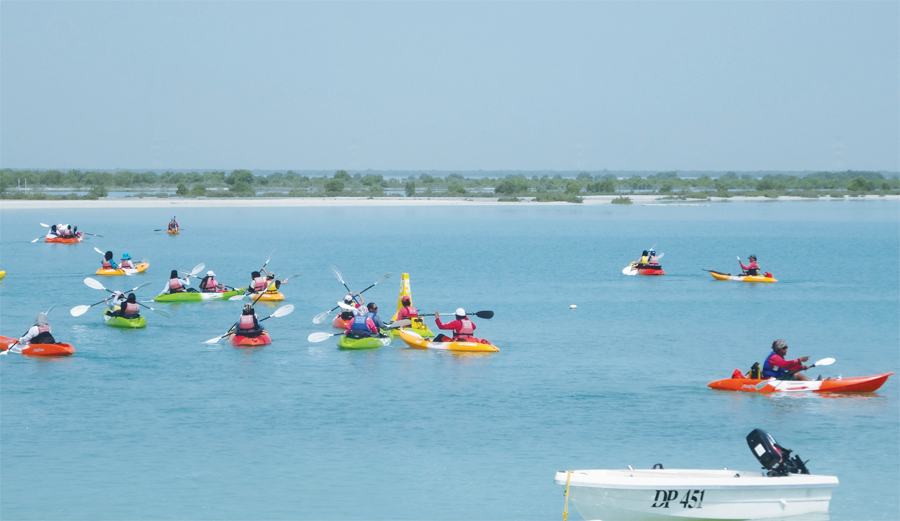 As part of a science lesson, students kayaked to Mangrove Island to collect data about the trees.