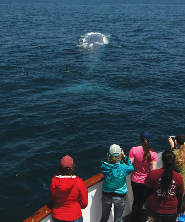 Earthwatch volunteers studying human impacts on marine mammals observe a blue whale (Balaenoptera musculus) in the Southern California bight, the section of coastline that stretches from northern Santa Barbara County to San Diego. (Photo by Shane Keena.)