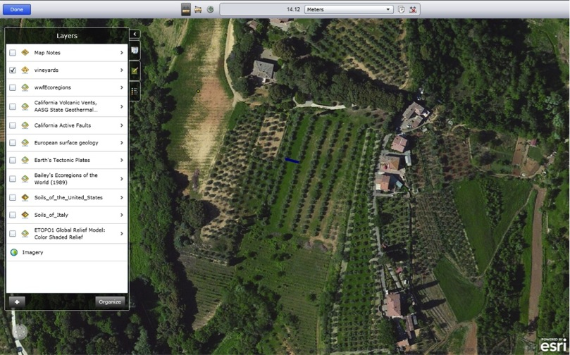 Example of vine spacing, density measurement (ArcGIS Explorer Online).