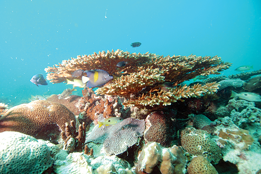 Ras Ghanada, the largest coral reef in the UAE and the Gulf region, supports a flourishing marine life, including turtles, dugongs, sea snakes, and clownfish. (Credit: Edwin Grandcourt, ©EAD.)