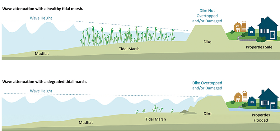 Coastal Defense quantifies how natural habitats (oyster and coral reefs, tidal marshes, seagrass beds) protect coastal areas by reducing wave-induced erosion and inundation. It uses standard engineering techniques to help users estimate how and where to restore or conserve critical habitat and increase the resilience of a coastal community and its infrastructure. This and other infographics accompany the Coastal Resilience apps to illustrate their intended use.