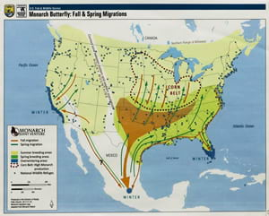 Map of the migration of Monarch butterflies