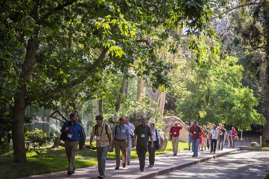 A group of forestry professionals stroll among the trees on the Esri campus in Redlands, California.