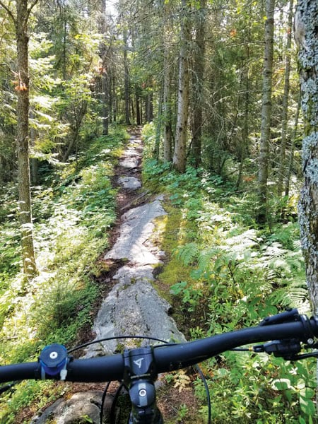 A photo of a difficult forest trail taken from over the handlebars of a bike