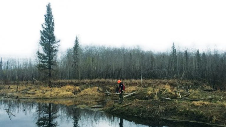 A mobile fieldworker stands at the shore of a watercourse banking a wooded area that has been harvested