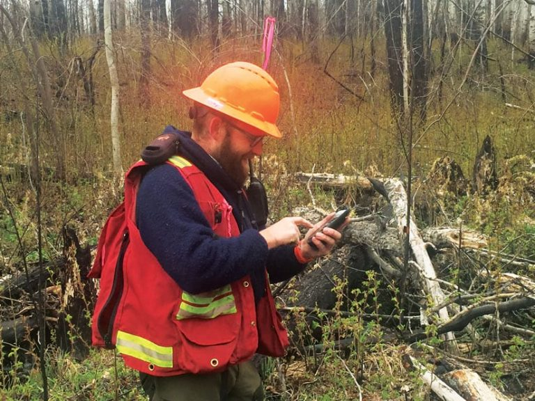 A fieldworker using a phone with ArcGIS Collector to collect real-time data in the field
