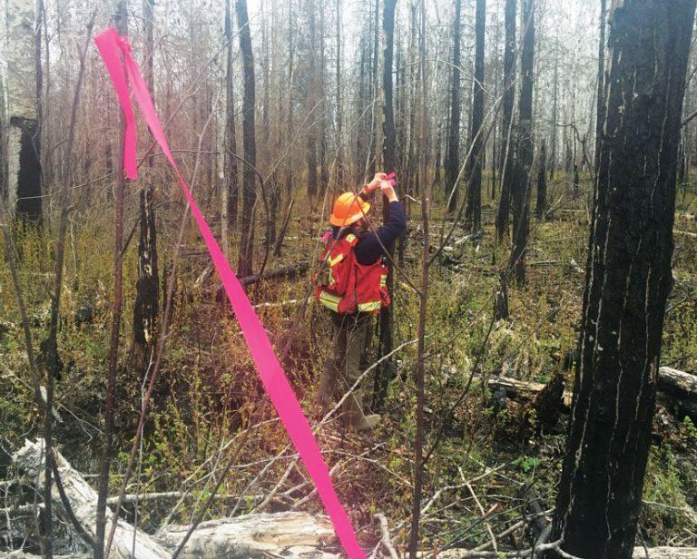 Fieldworker ties ribbons around trees to mark cutlock boundaries