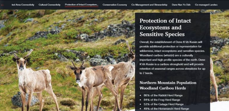 Background of caribou grazing on a green hill side on a website landing page of protection of intact ecosystems and sensitive species