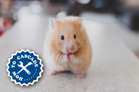 How could you not click this adorable hamster?