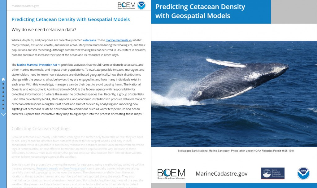 Predicting Cetacean Density with Geospatial Models story map