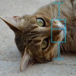 Cat_boxplot