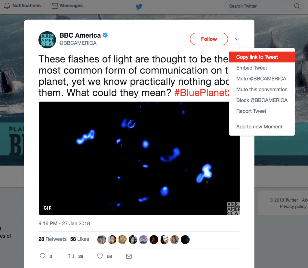 Embed Tweets in Story Map Journal in five easy steps
