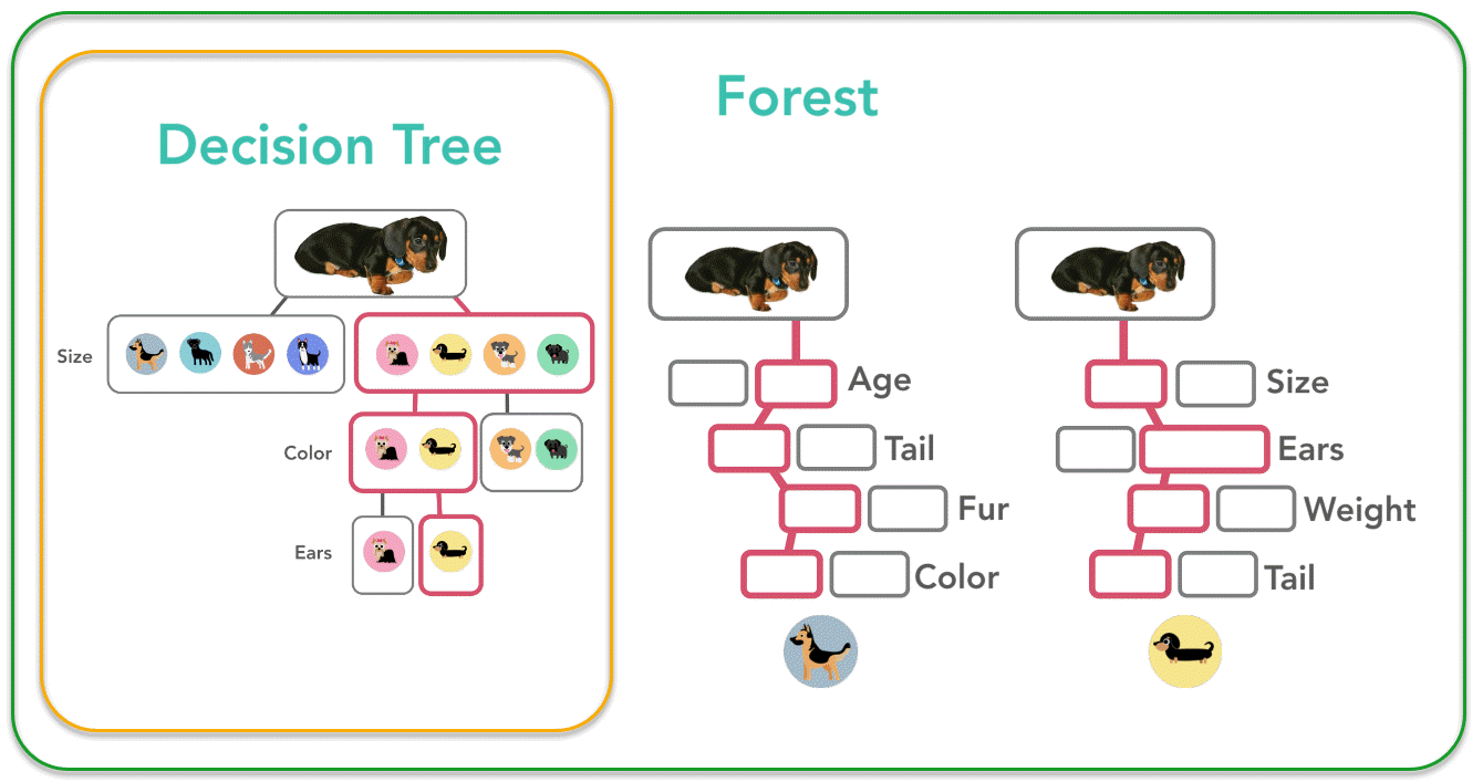 Example of a decision tree used to classify dog breeds. Many trees are combined into a forest.
