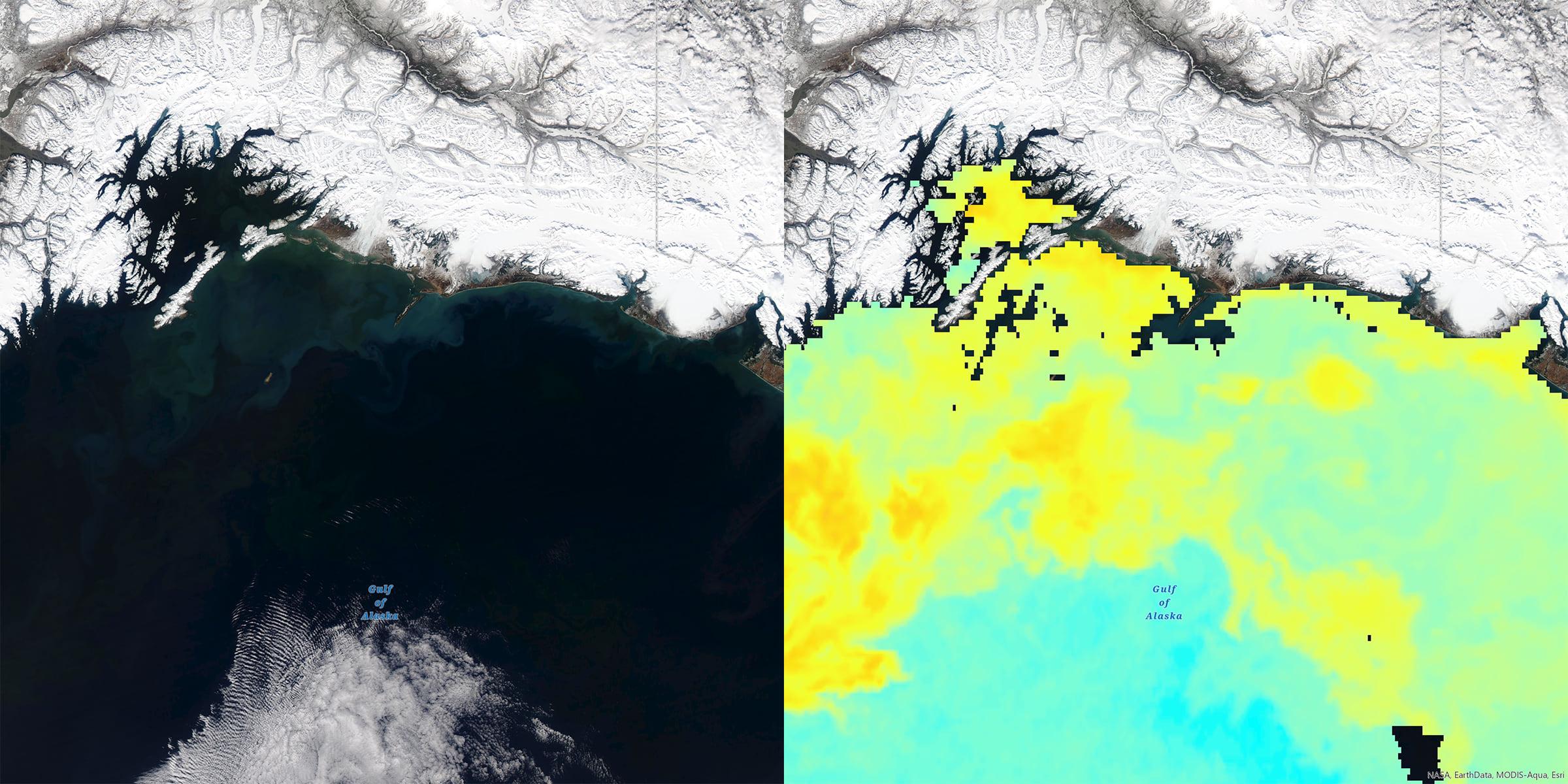 http://Chlorophyll,%20Phytoplankton%20Bloom,%20Gulf%20of%20Alaska