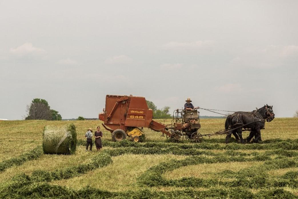 Pastoral farming