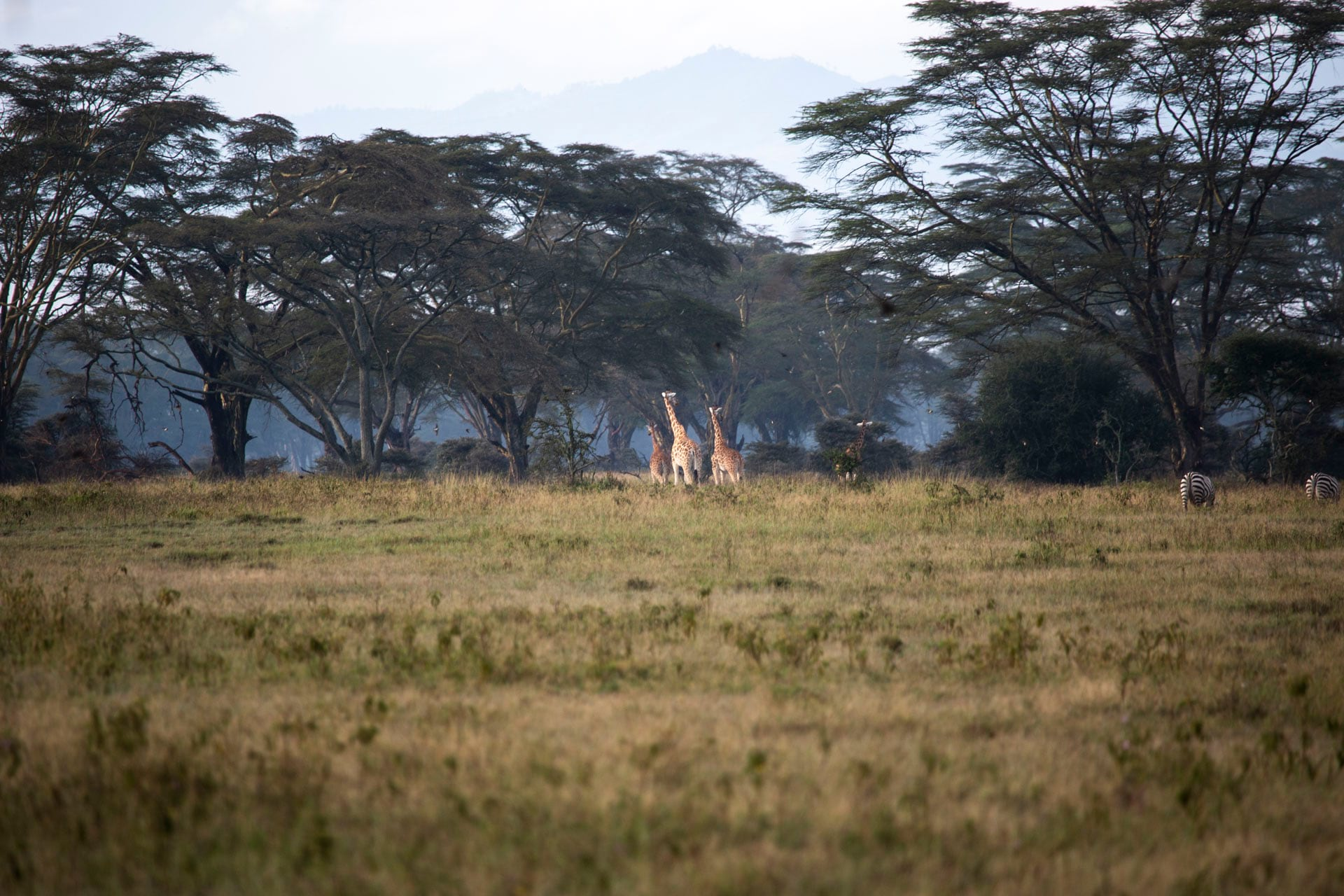 Lake Nakuru National Park located in the Great Rift Valley and is home to a diversity of birds and mammals. Photo: Ross Donihue
