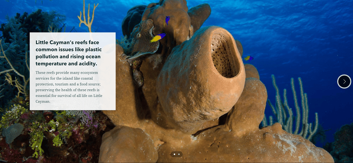 Slideshow feature in the Little Cayman Hope Spot story.