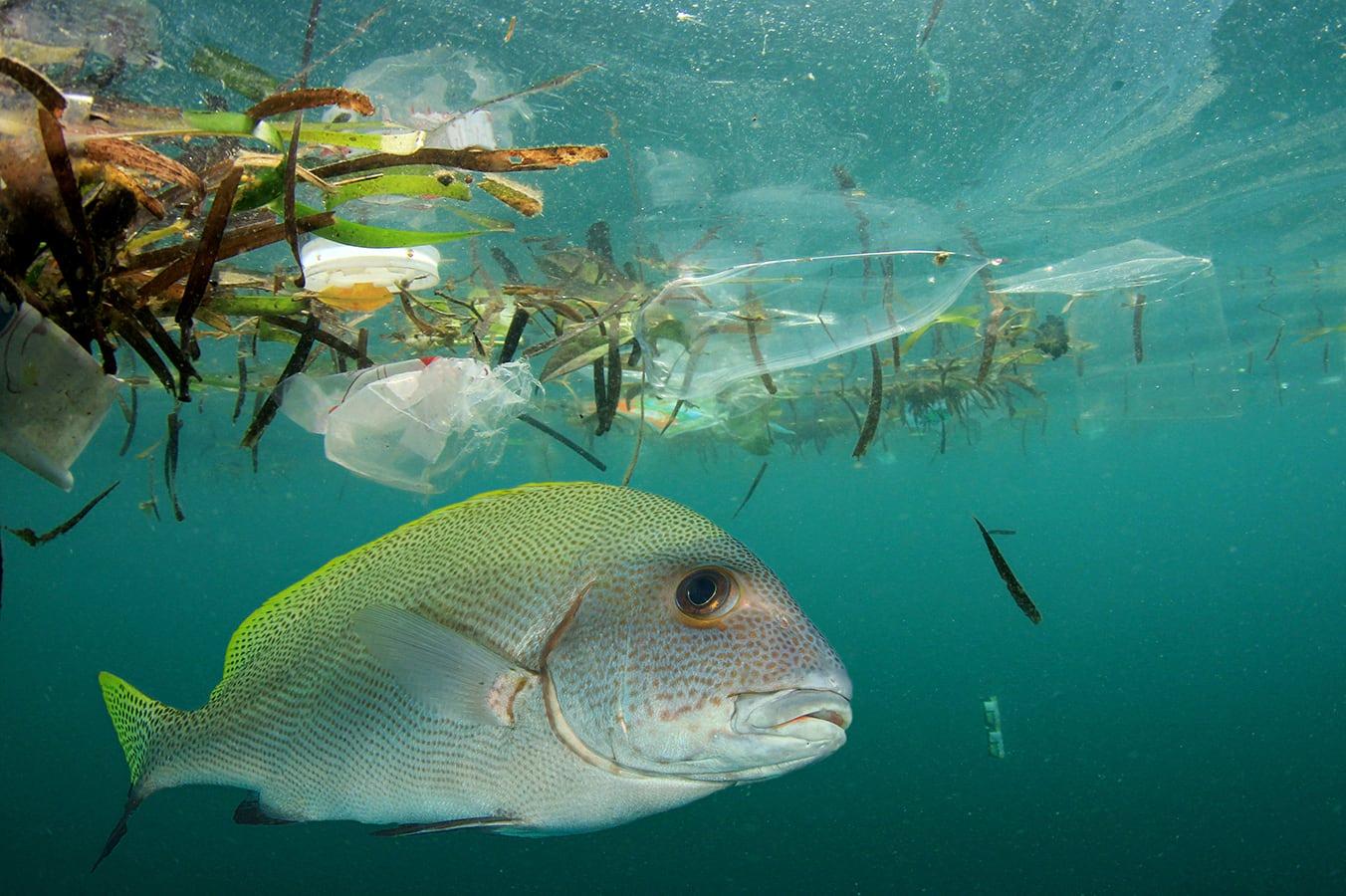 Fish Ocean Plastic