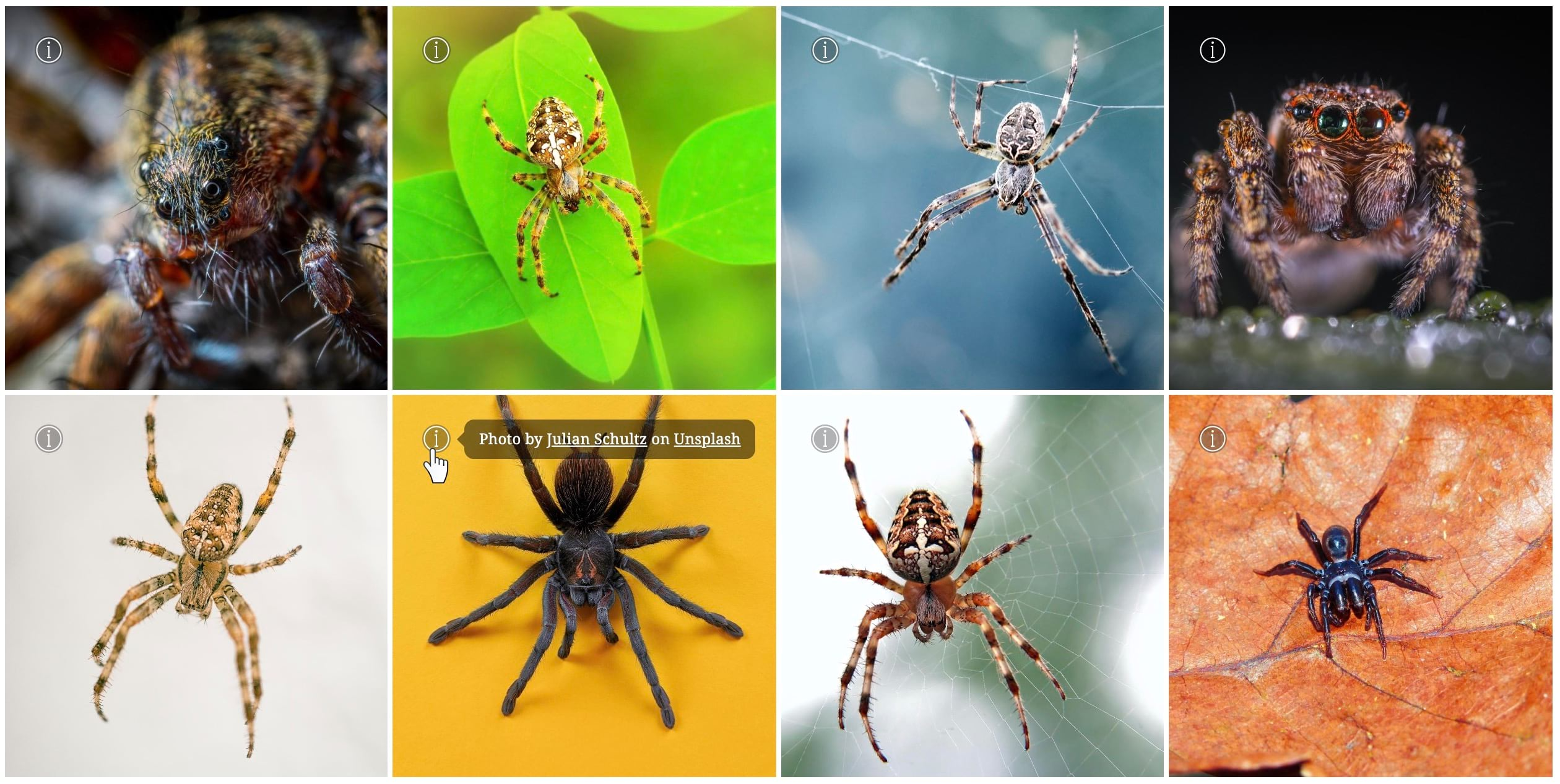 A collage of spider photos