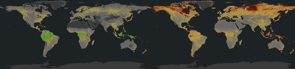 lapisan biomassa karbon