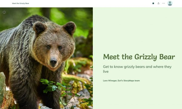 A brown bear walking in a forest get caught on camera