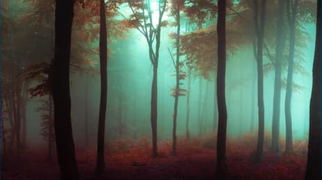 Foggy forest scene