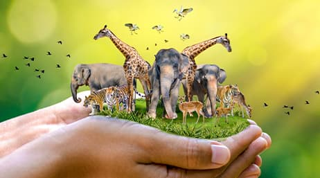 A pair of hands holding an assortment of wild animals