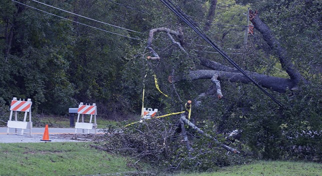 A fallen tree branch and downed power line are blocking a road marked with orange and white striped safety signs.