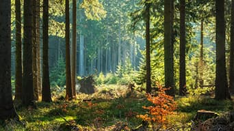 Tranquil forest with light shining through the trees