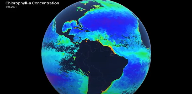 global chlorophyll concentrations