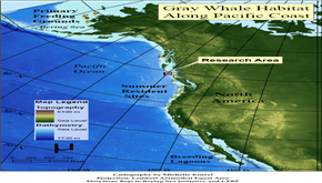 Impact of Climate Changes on Gray Whales