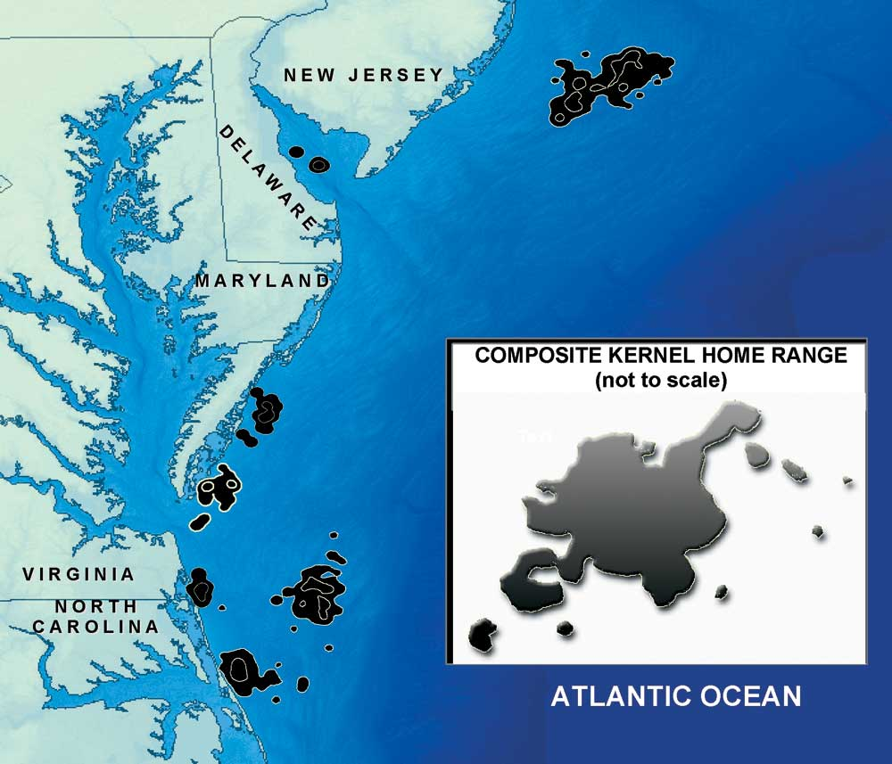 Location Size And Shape Of Individual Resident Foraging Areas North Of Cape Hatteras N C U S A And Composite Resident Foraging Area Insert