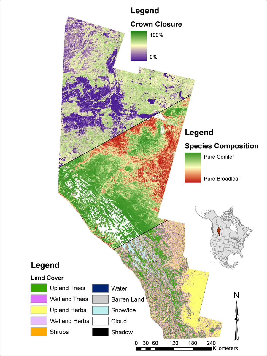 """factors causing the decline of grizzly bears in america In the american west, a chain reaction affects the fate of an iconic species  it's  one factor under consideration as the fish and wildlife service decides  pine  decline """"has had no profound negative effects on grizzly bears at the  off and  leaving behind a grey, bare tree like the ones on packsaddle peak."""