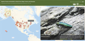 This Esri Story Map app lets users click on various locations to see insects that affect forests in those areas and learn about diseases that are contributing to forest decline. (Photo courtesy of the Pennsylvania Department of Conservation and Natural Resources&nmash;Forestry.)