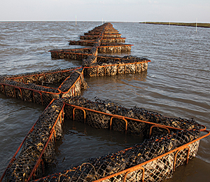 Alabama oyster reef installed with booms.