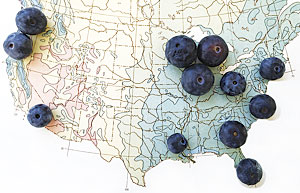 Placing different-sized blueberries on top of a map to illustrate differences in blueberry crop yields is one eye-catching way to illustrate the point. (Map courtesy of Nigel Holmes.)