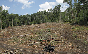 A tornado that hit the Powdermill Nature Reserve in in southwestern Pennsylvania, June 2012 provided a research opportunity for studying the effects of management practices. Because of the extent of the study area, UAVs were used to supplement on-the-ground monitoring.