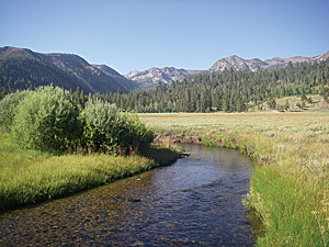 Silver King Creek (Photo courtesy of CDFW)