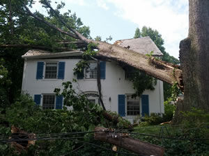 A tree on private property collapsed during a storm, damaging a house in  Washington, DC.