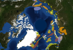 This map is a vulnerability picture of the Arctic.  Areas in deeper burgundy are considered more environmentally vulnerable during summer due to the walruses, seals, and the large number of whales feeding in the area.